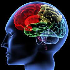 Teden možganov: Človek ni otok